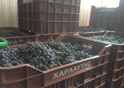 Athenee Importers Harlaftis 5