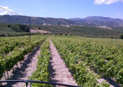Athenee Importers Karavitakis Winery 02