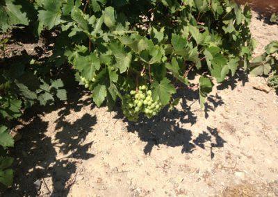 Athenee Importers Karavitakis Winery 04