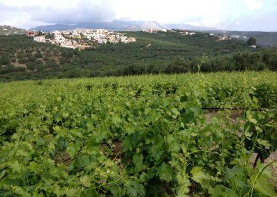 Athenee Importers Karavitakis Winery 07