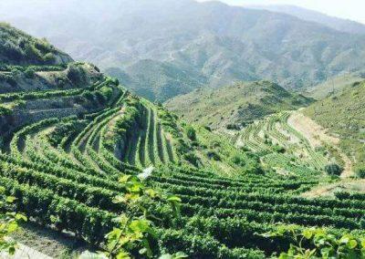 Tsiakkas Winery Athenee Importers 02