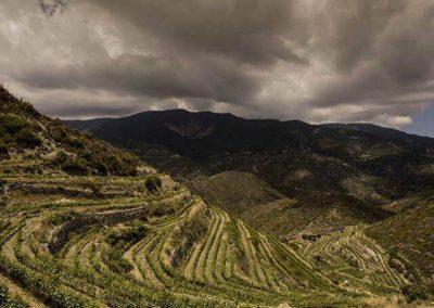 Tsiakkas Winery Athenee Importers 03