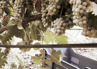 Tsiakkas Winery Athenee Importers 06